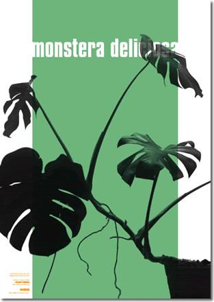 wall plants 2 monstera