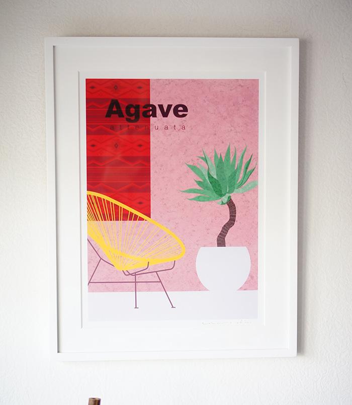 agave_apc2